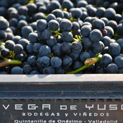 Bodegas Vega de Yuso